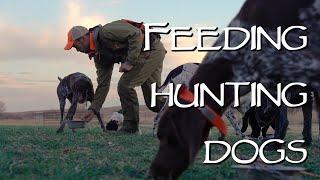 Hunting Dog Health  Feeding Your Dog On The Road
