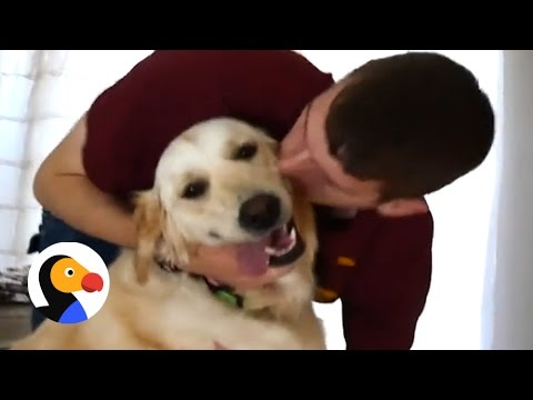 Dogs Reunite With Soldier Dad   The Dodo