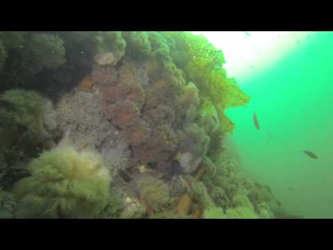 Gadds Wall Dive