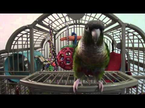 Part 1:  Kiwi cage tour