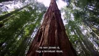 A Természet szól hozzád – Robert Redford, a mamutfenyő