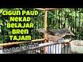 Ciblek Gunung Muda Belajar Bren Rapat Tajam Pancingan Cigun Macet Bunyi Agar Langsung Nembak Gacor  Mp3 - Mp4 Download