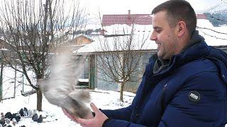 Alenovi golubovi i kokoške osvajaju nagrade