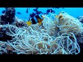 Panorama Alam Bawah Laut Sabang Yang Menakjubkan