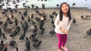 Jazzie feeding ducks at Miramar Lake, San Diego