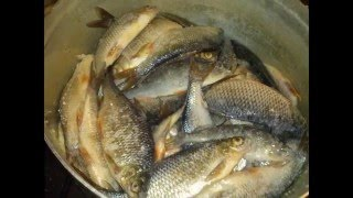 Мое хобби, отчет о рыбалке за 2015 год