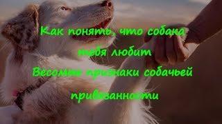 кАК ПОНЯТЬ ЧТО СОБАКА ТЕБЯ ЛЮБИТ ВЕСОМЫЕ ПРИЗНАКИ  HOW TO UNDERSTAND THAT THE DOG LOVES YOU
