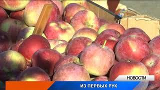 В Уральске набирает популярность сельхозярмарка