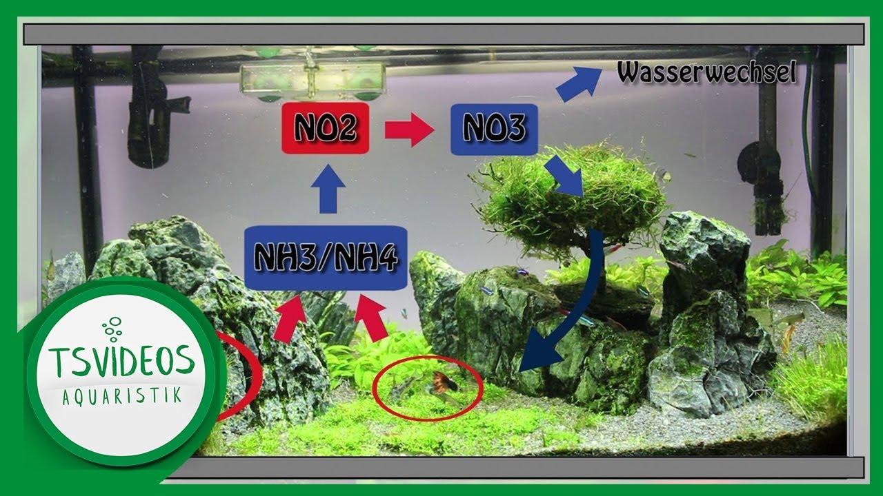 Nitrit Im Aquarium