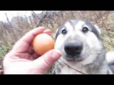 Соболь это яйцо!Понимаешь?