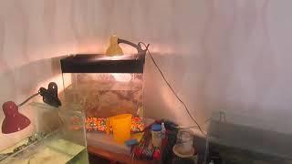 большая работа песок в аквариум