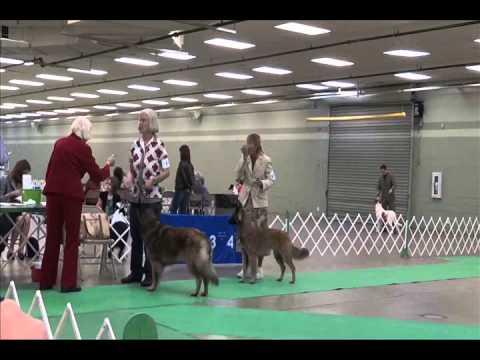 TriStar Conformation Dog Show 10/14/2012