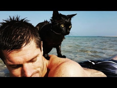 Couple Take New Rescue Cat To The Beach And Make A Startling Discovery