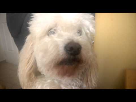 perro llorando porque no lo acarician
