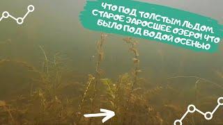 Что под толстым льдом Старое заросшее озеро Что было под водой осенью