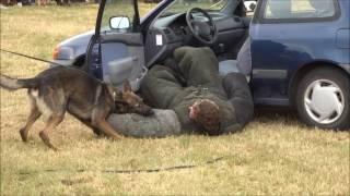 Bankräuber wird von Polizeihund aus brennendem Auto gerissen (Demonstration)