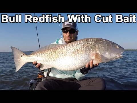 How To Catch Bull Redfish (Cut Bait Tips)