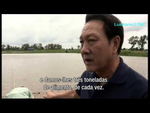 Peixe, Criação em Águas Turbulentas