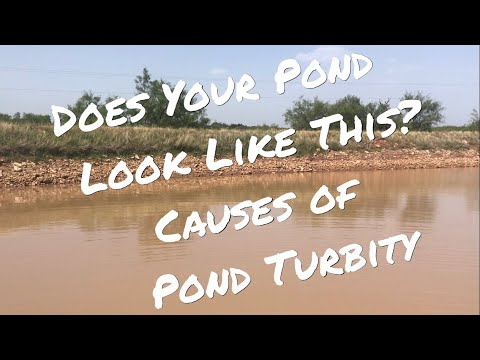 Does Your Lake Look Like This? Causes Of Pond Turbidity