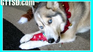 Dogs Opening Christmas Presents - Santa Paws Came! Puppy Christmas thumbnail