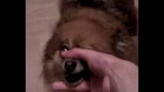 Beatbox Dog Attack!