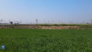 GLOBALink | Chinese scientists use pest recognition tool to help increase crops growth