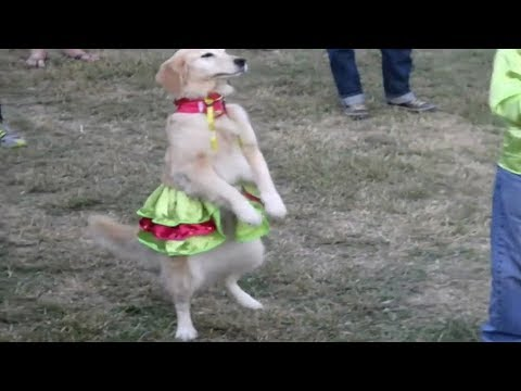 Dog Dancing Despacito Funny Compilation