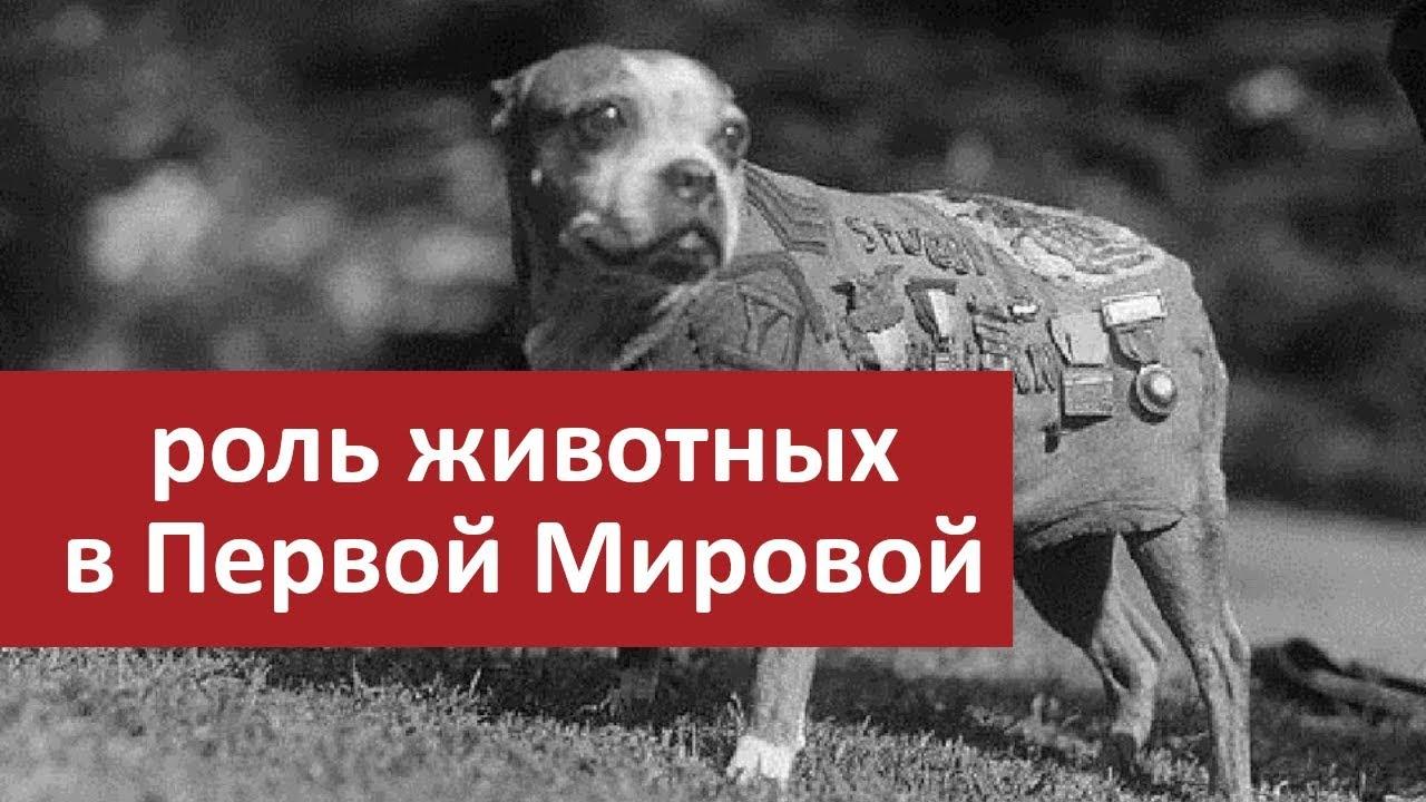 Роль животных в Первой Мировой Войне | Мудреныч | The Great War на русском