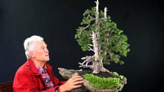 INTERNATIONAL BONSAI ACADEMY with Walter Pall 2013 - Case Study 6/ Picea abies yamadori