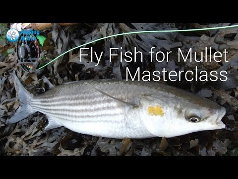 Part 2 - Mullet Masterclass - UK Saltwater fly fishing festival