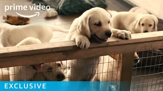 Dog Days of Summer - Exclusive | Prime Video