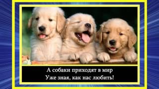 Мила Журавлёва - Почему собаки Так мало живут!?