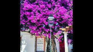 Самые красивые сады и парки мира, мафра португалия достопримечательности