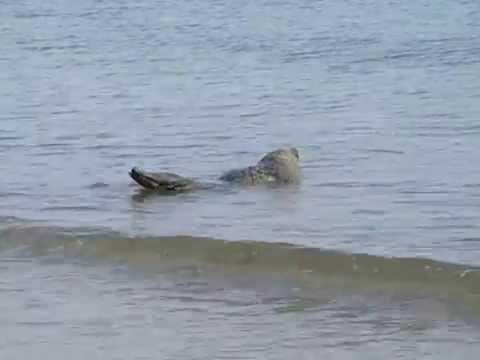 U Seal Vs Peel And Seal Seal close to b...