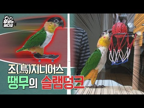 (ENG SUB) 쁘악수!!! 조(鳥)지니어스 땡무의 앵무듀스X101