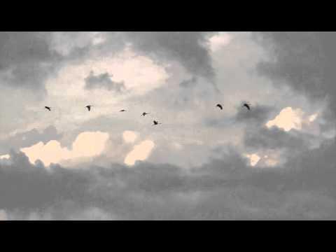 Video: Sandhill Cranes migrate through Phyllis Haehnle Sanctuary on their way south