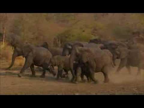Rhino Stampede Doovi