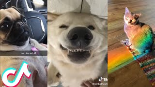 Are These the Cutest Pets on Tiktok?