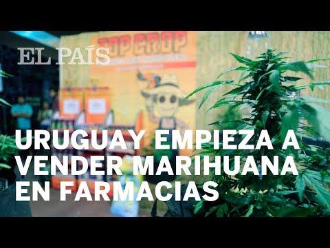 Uruguay empieza a vender marihuana estatal en farmacias   Uruguay