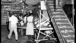 Louisiana Dried Shrimp History
