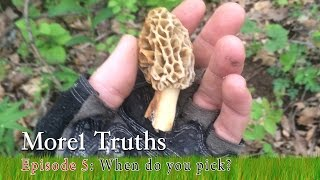 When should I pick Morel Mushrooms? - Morel Truths: Episode 5