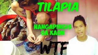 Food Tripping - Tilapia Catch and cook