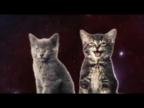Поющие коты!!!!