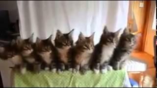 Котята танцуют выгл