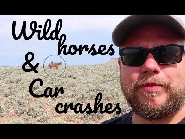 a-car-went-over-the-cliff-and-a-successful-hunt-for-wild-horses