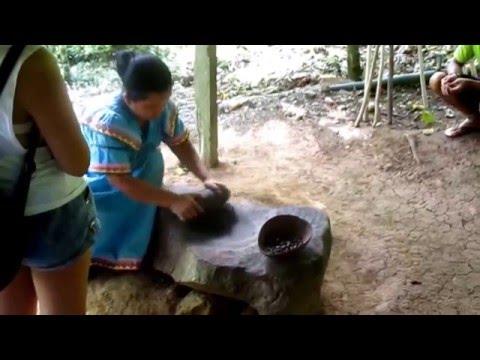 Cacao Farm, Almirante