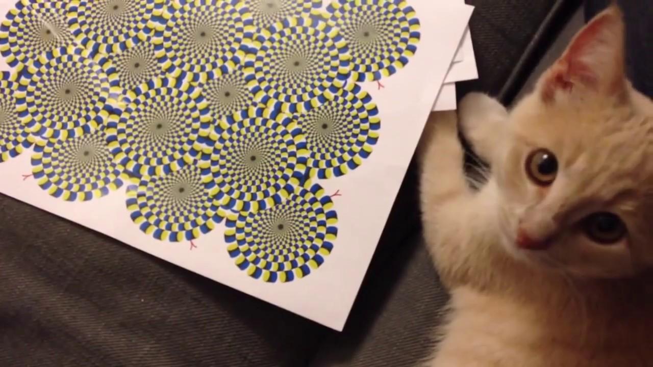 Смех с котятами 2014 - YouTube