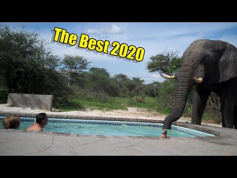 Лучшие видео из подборок за 2020 год