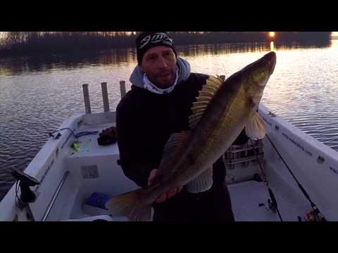 Fishing Mantova 2017