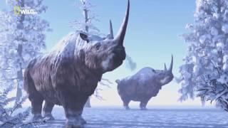 Дикая природа  Увлекательная зоология Рассказ о тигре, носороге, и свиньях, и нелепых законах США